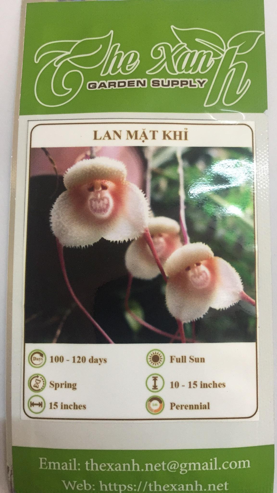 Bộ 3 gói Hạt giống hoa lan khỉ
