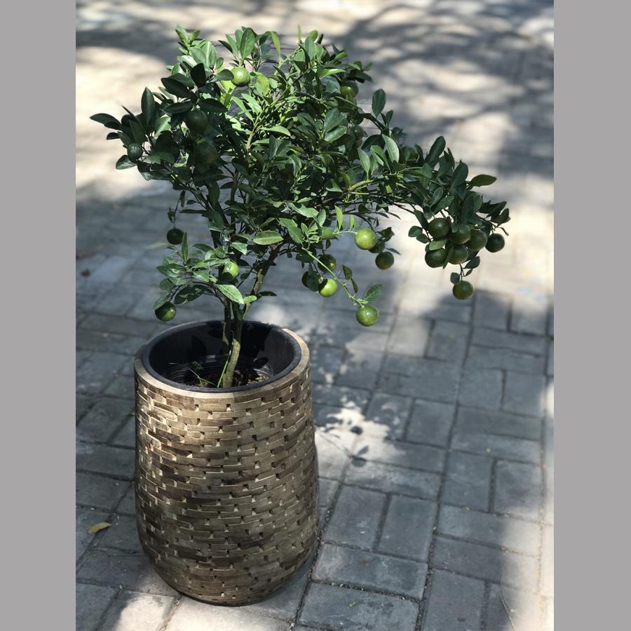 Chậu gỗ ghép tròn màu walnut cg03.2545