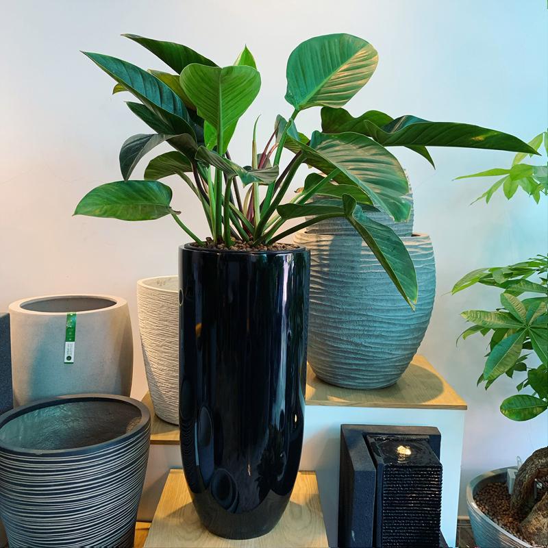 Chậu trồng cây cao cấp bằng composite Anber 6689 (Đen bóng - D37xH80cm)