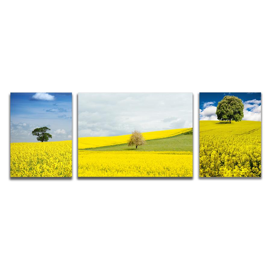 Bộ 3 Tranh Canvas Đồi Hoa Vàng Khoe Sắc Tặng Sơ Đồ Treo Tranh Và Đinh Treo Tranh - Khung Hình Phạm Gia PGTK3A