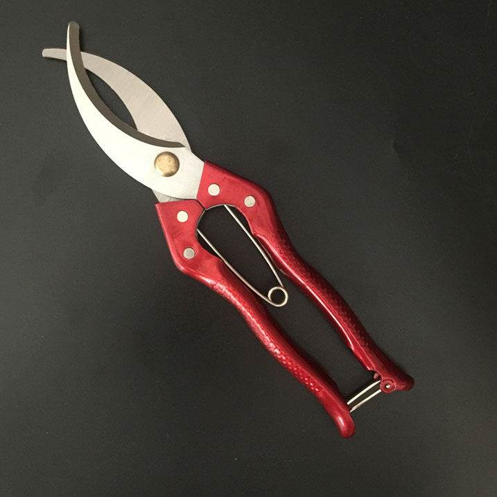 Kéo khoanh vỏ đỏ rộng 6cm lưỡi thẳng