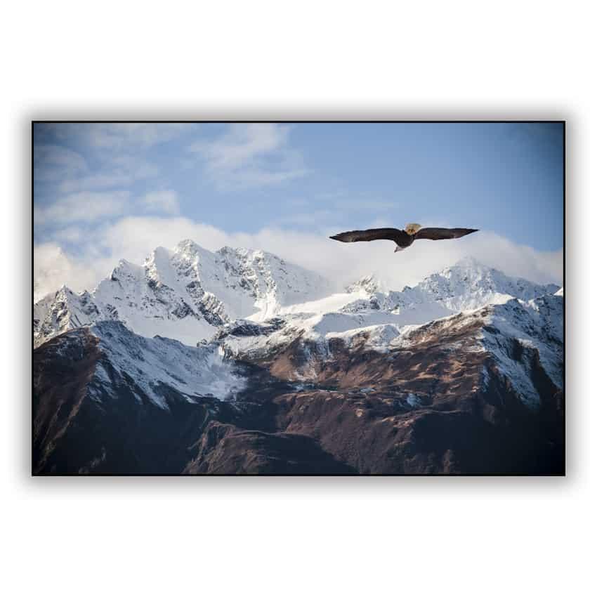 Tranh trang trí in Canvas Đại Bàng Núi Alaska - 8313811 , 7316627025009 , 62_16973375 , 789000 , Tranh-trang-tri-in-Canvas-Dai-Bang-Nui-Alaska-62_16973375 , tiki.vn , Tranh trang trí in Canvas Đại Bàng Núi Alaska