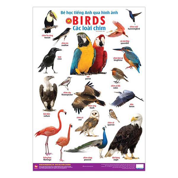 Bé Học Tiếng Anh Qua Hình Ảnh - Các Loài Chim (Tái Bản)