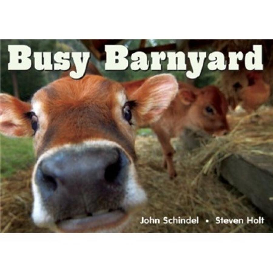 Busy Barnyard - 1235030 , 6280734521758 , 62_5263337 , 136000 , Busy-Barnyard-62_5263337 , tiki.vn , Busy Barnyard