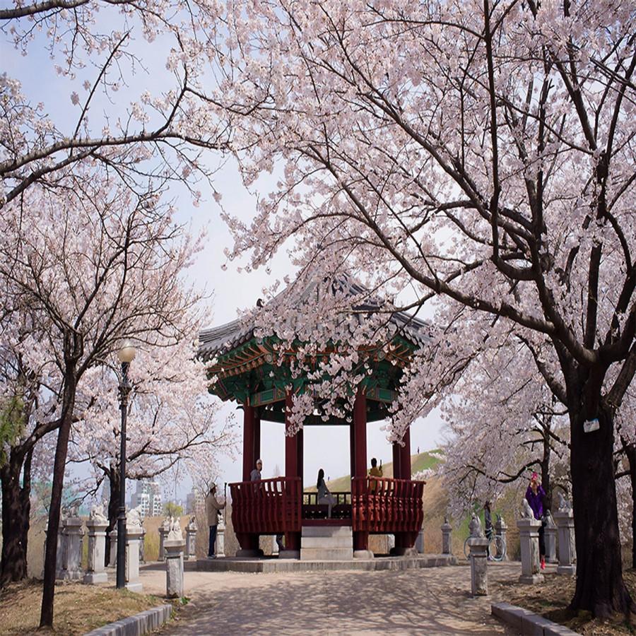 Tour Hàn Quốc Mùa Hoa Anh Đào Rực Rỡ 5N4Đ : Khám Phá Seoul - Đảo Nami - Công Viên Everland  Yeouido - 1785622 , 6880325307619 , 62_13118366 , 14490000 , Tour-Han-Quoc-Mua-Hoa-Anh-Dao-Ruc-Ro-5N4D-Kham-Pha-Seoul-Dao-Nami-Cong-Vien-Everland-Yeouido-62_13118366 , tiki.vn , Tour Hàn Quốc Mùa Hoa Anh Đào Rực Rỡ 5N4Đ : Khám Phá Seoul - Đảo Nami - Công Viên