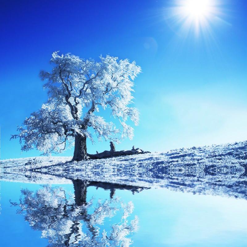 Tranh 3D cây tuyết đổ bóng mặt nước D0202 - 7448222 , 8017643324877 , 62_15626645 , 200000 , Tranh-3D-cay-tuyet-do-bong-mat-nuoc-D0202-62_15626645 , tiki.vn , Tranh 3D cây tuyết đổ bóng mặt nước D0202