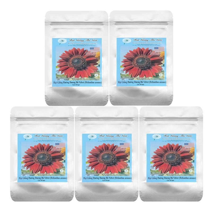 Bộ 5 Túi 30H Hạt Giống Hoa Hướng Dương Đỏ - Velvet (Helianthus Annuus)