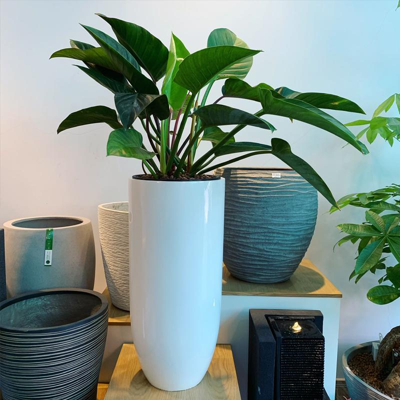 Chậu trồng cây cao cấp bằng composite Anber 6689 (Trắng bóng - D37xH80cm)