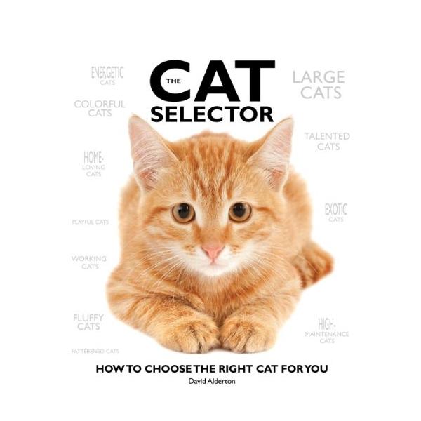 Cat Selector - 778993 , 2463628616189 , 62_11446346 , 678000 , Cat-Selector-62_11446346 , tiki.vn , Cat Selector