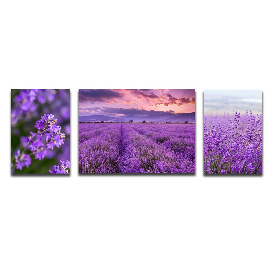 Bộ 3 Tranh Canvas Tặng Kèm Sơ Đồ Treo Tranh Và Đinh Treo Tranh Chuyên Dụng - Khung Hình Phạm Gia PGTK166