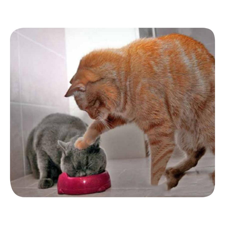 Miếng Lót Chuột Chống Trượt Hình Mèo - 9684600 , 9068421507516 , 62_15419869 , 172000 , Mieng-Lot-Chuot-Chong-Truot-Hinh-Meo-62_15419869 , tiki.vn , Miếng Lót Chuột Chống Trượt Hình Mèo