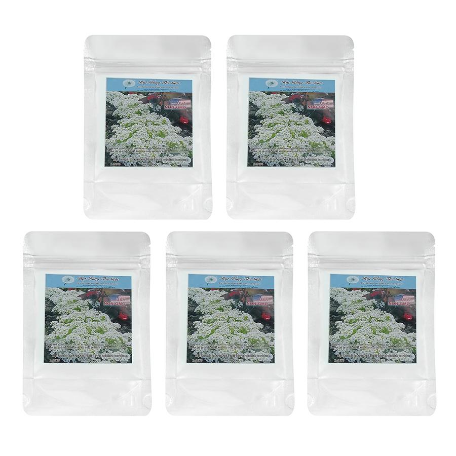 Bộ 5 Túi Hạt Giống Hoa Ngàn Sao - Thảm Tuyết (Lobularia maritima) 100 Hạt