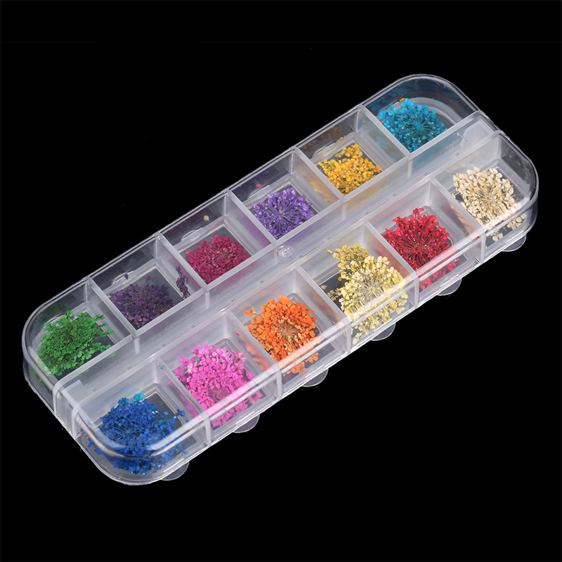 12 Colors Real Nail Dried Flowers Nail Art Decoration DIY Tips with Case Big Flowers - #1 - 1832936 , 5159687070105 , 62_13713473 , 173000 , 12-Colors-Real-Nail-Dried-Flowers-Nail-Art-Decoration-DIY-Tips-with-Case-Big-Flowers-1-62_13713473 , tiki.vn , 12 Colors Real Nail Dried Flowers Nail Art Decoration DIY Tips with Case Big Flowers - #1