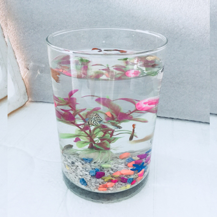 Bể cá mini trụ tròn 12x20cm - Tặng phụ kiện