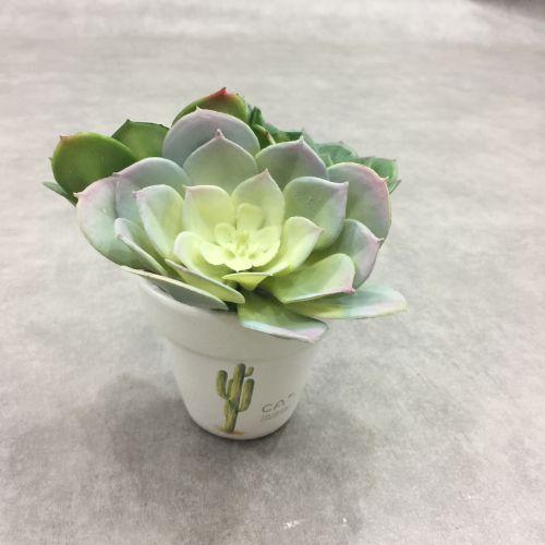Hoa sen đá giả - cây sen đá hoa hồng bằng nhựa dẻo