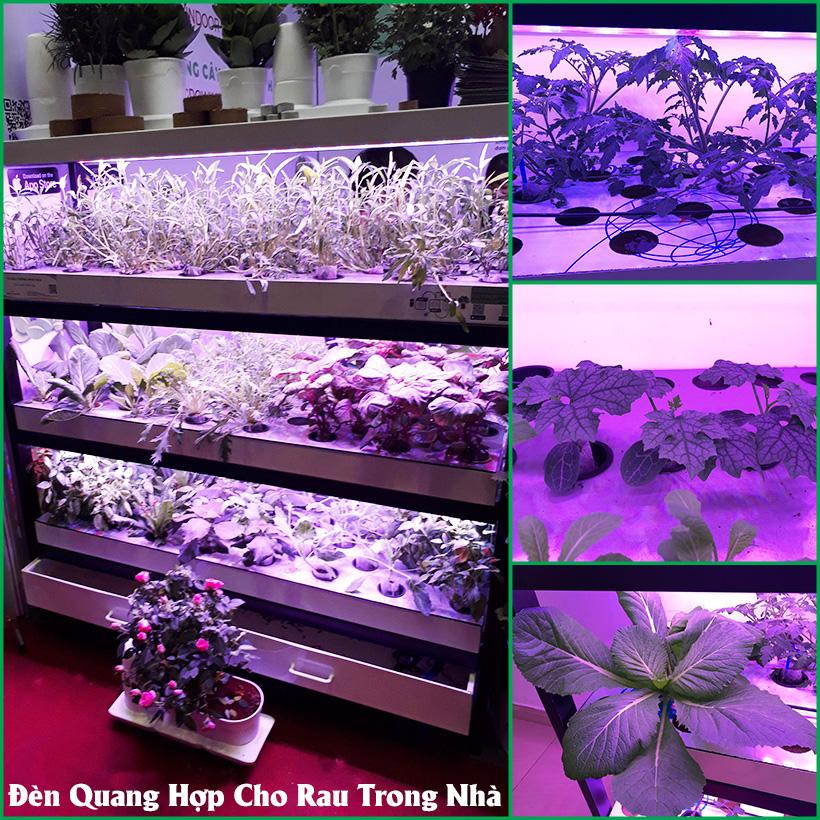 Đèn Quang Hợp Trồng Cây Trong Nhà Green Smart Light 30W (đèn dài 1.2 mét) được ứng dụng rộng rãi như trồng rau sạch tại nhà, trồng cây cảnh trong nhà, cây văn phòng, trồng rau thủy canh, các mô hình nuôi cây mô và cây con