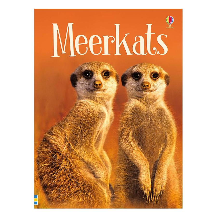 Usborne Meerkats