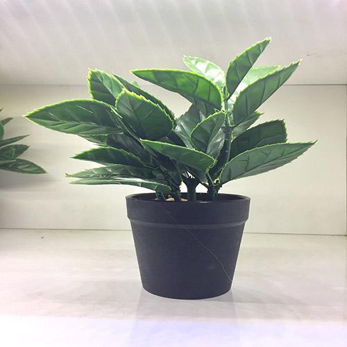 Chậu cây xanh trang trí - CCXTT 158