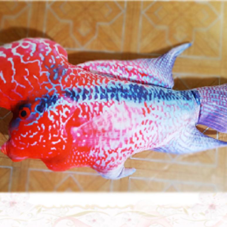 gối ôm cá la hán 3d dài 70cm