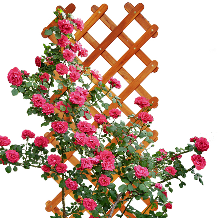 Giàn hoa hồng leo Gỗ Caro C190