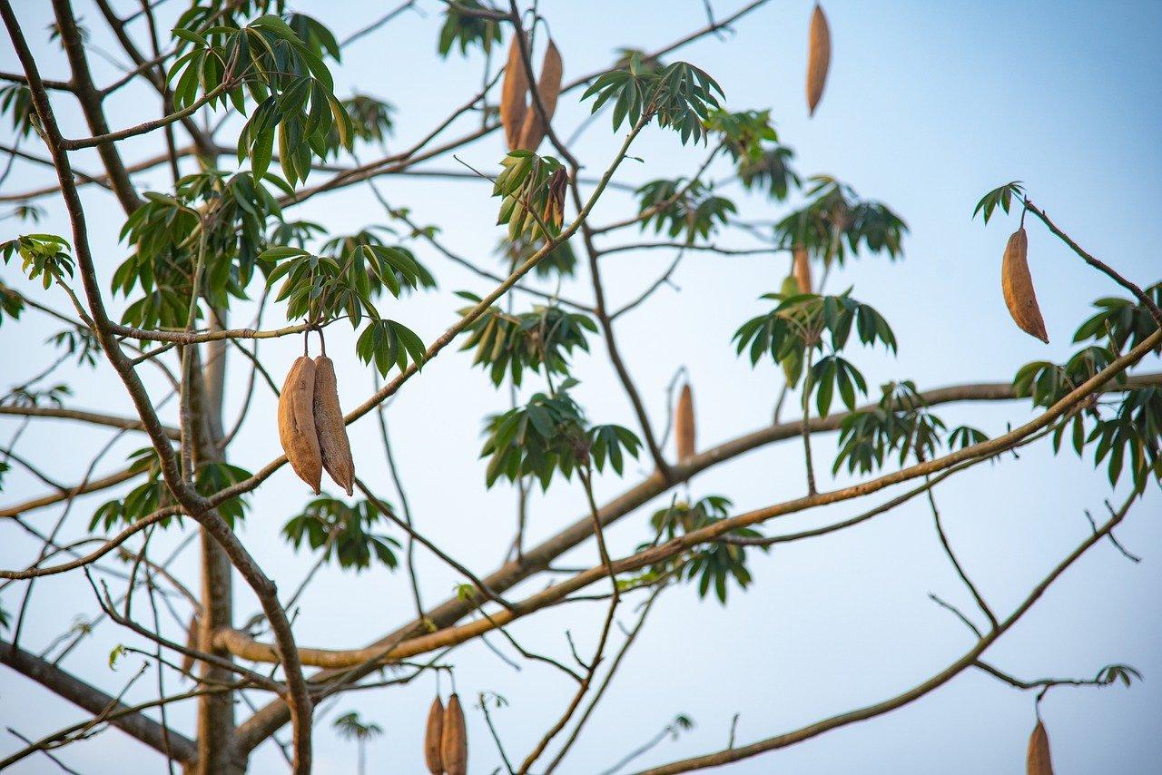 Bông Gòn nhồi gối, đồ chơi nỉ, thú bông từ cây gòn - cây gạo trắng (500gr)