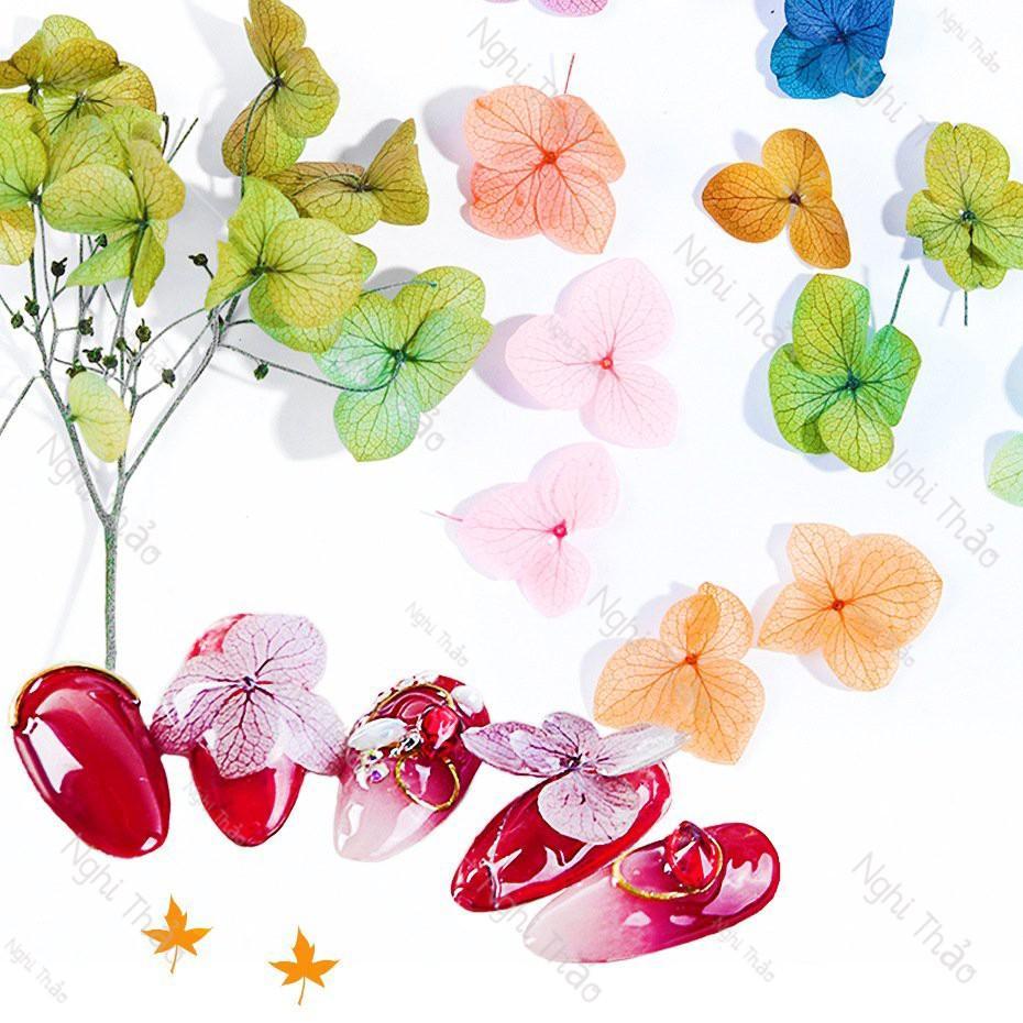 Hoa khô nail trang trí móng tay 7 màu