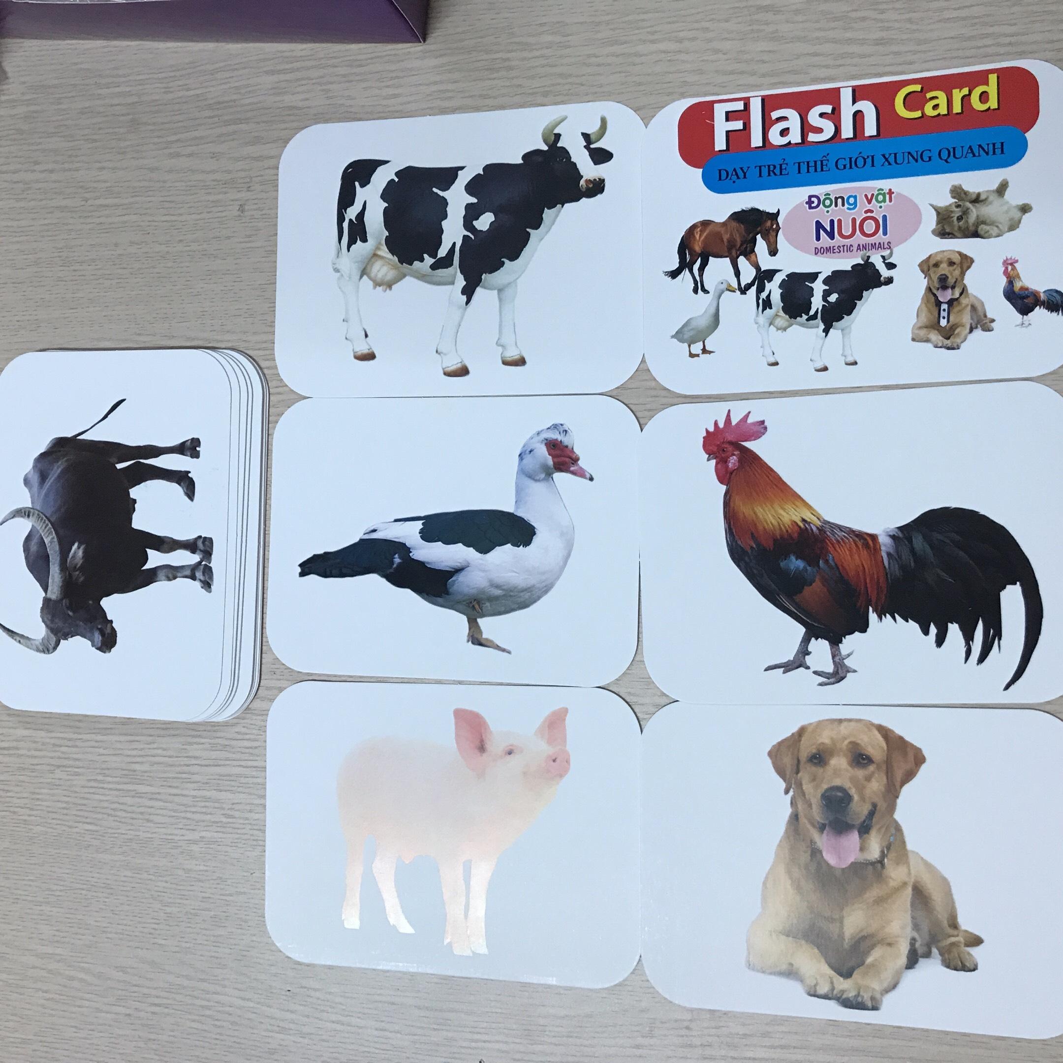 Combo Bộ Thẻ Animal 4D+ Hình Ảnh Con Vật Sinh Động + Thẻ Học Thông Minh Song Ngữ Anh- Việt Cỡ Lớn Cho Bé