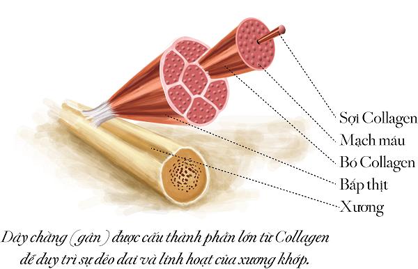 Dấu hiệu cơ thể thiếu hụt Collagen