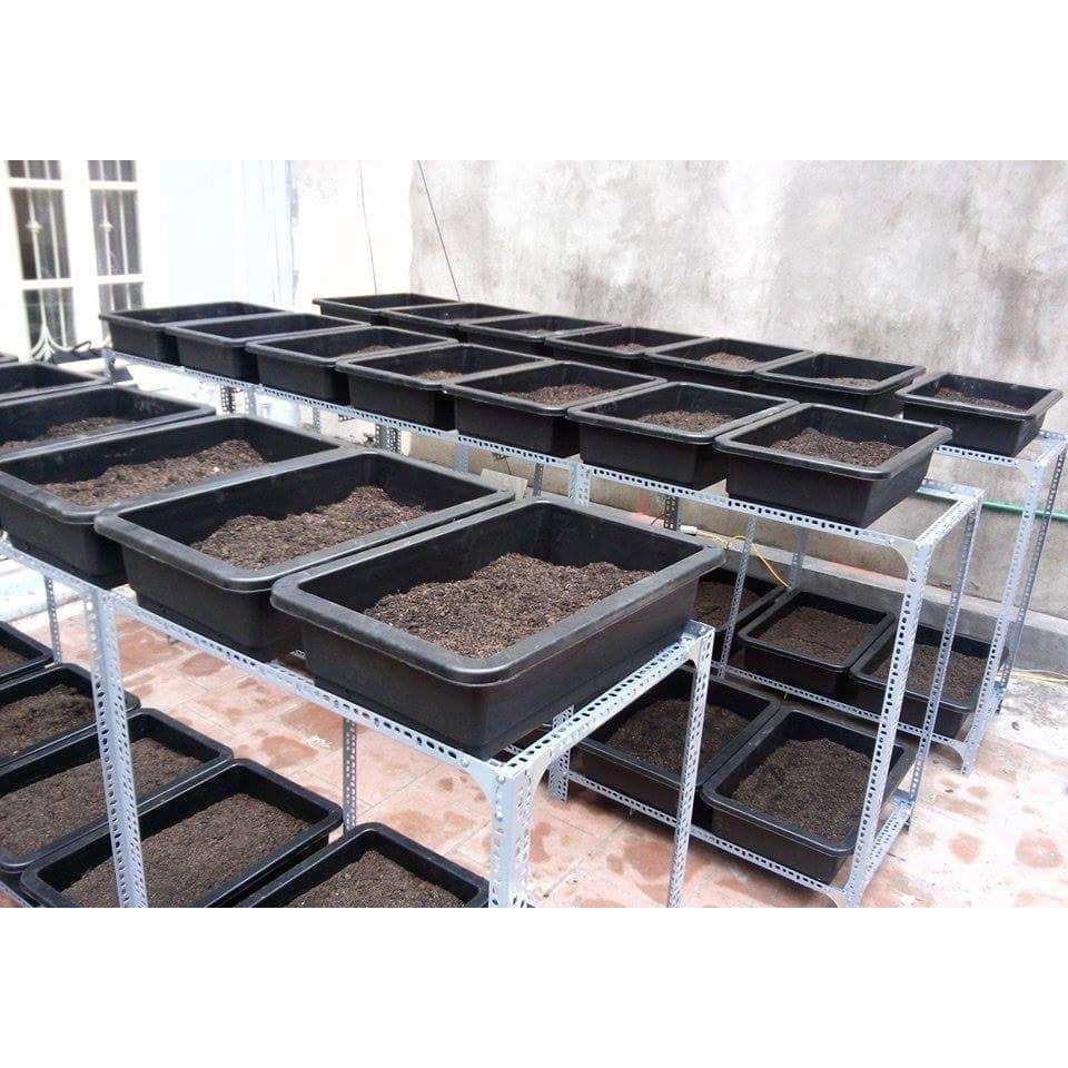 Combo 5 Chậu nhựa trồng rau sạch thông minh | Khay trồng rau thế hệ mới