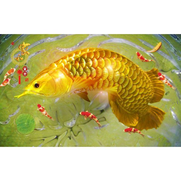Giấy dán tường - Cá Koi - Mã 29