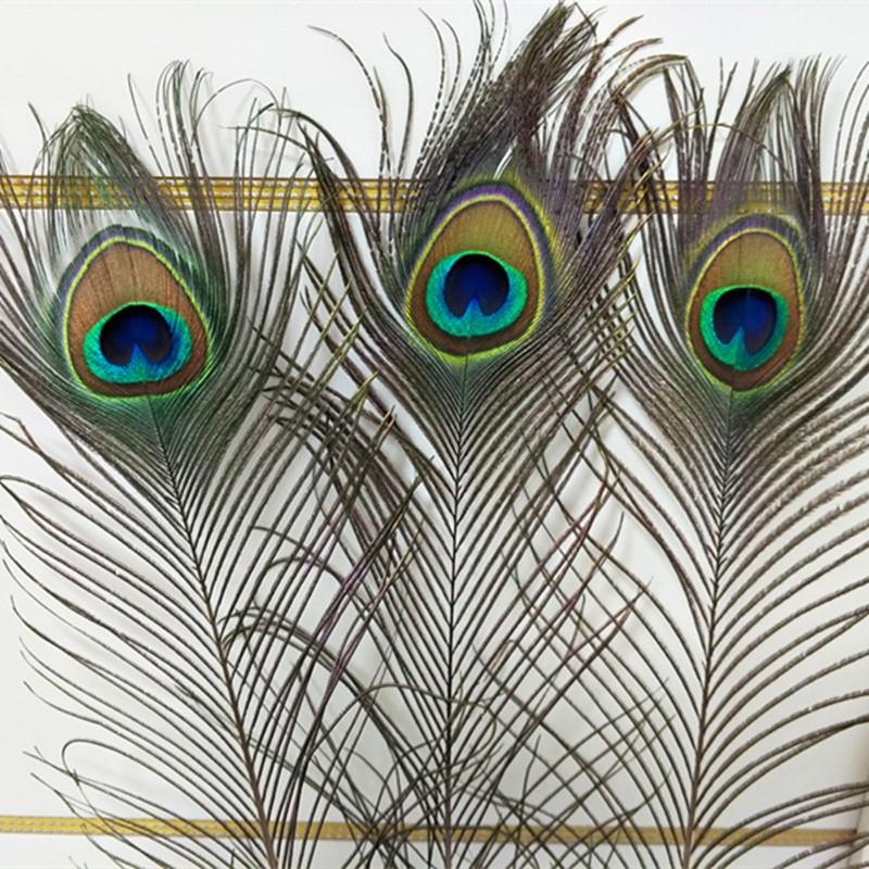 Combo 20 lông công tự nhiên dài 40-50 cm