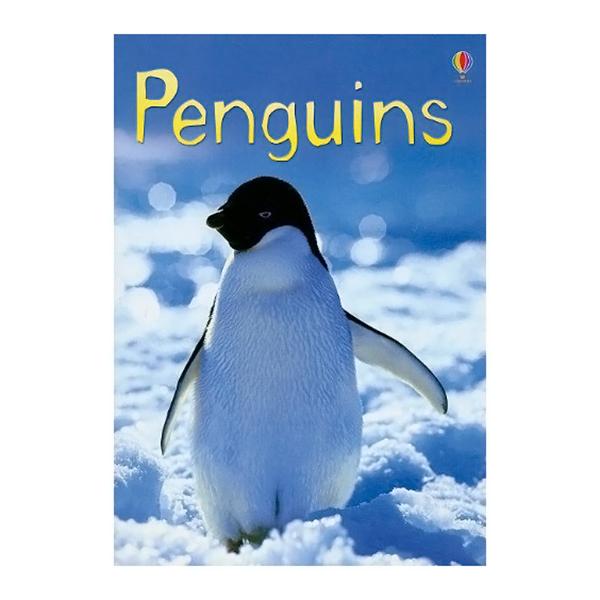 Usborne Beginners Boxed Set: Animals