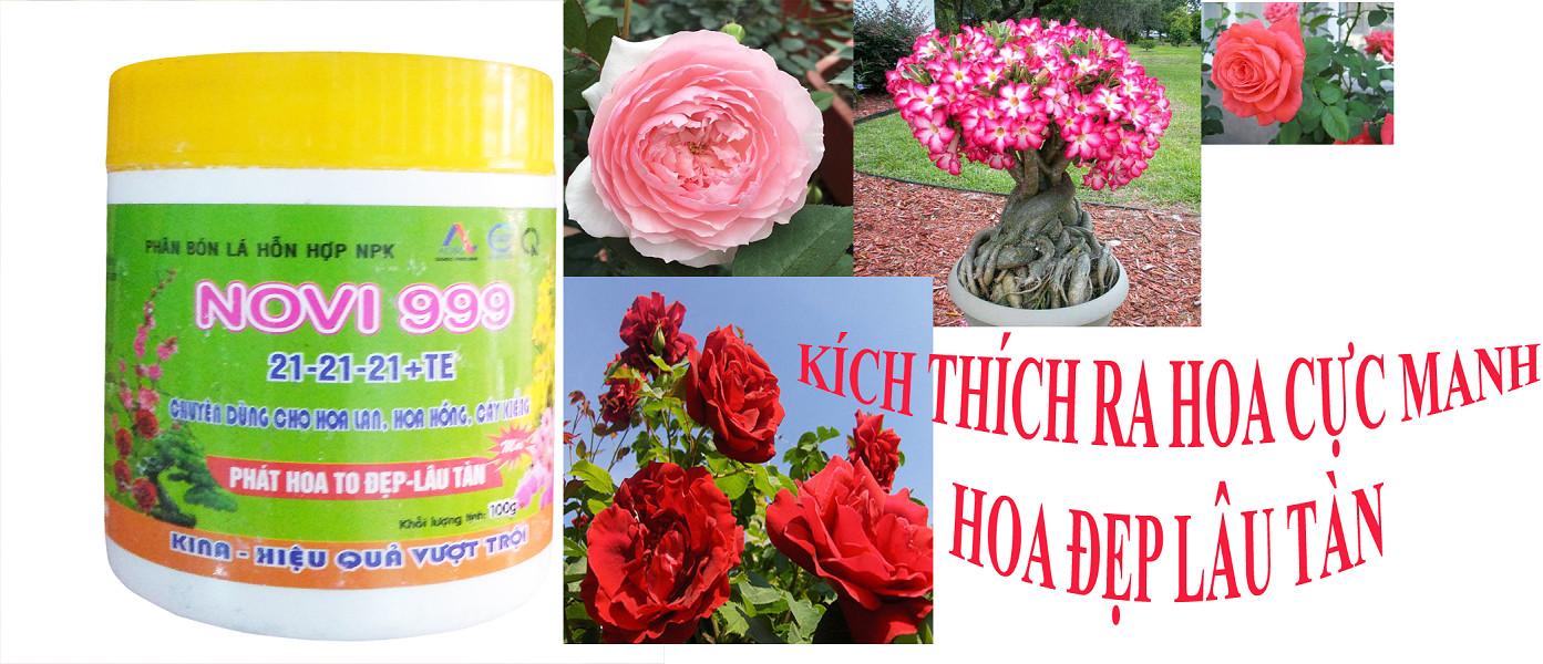 Bộ 3 hủ phân bón dưỡng cây tốt lá nhiều hoa Kina Novi 999 (3 hủ x 100g)