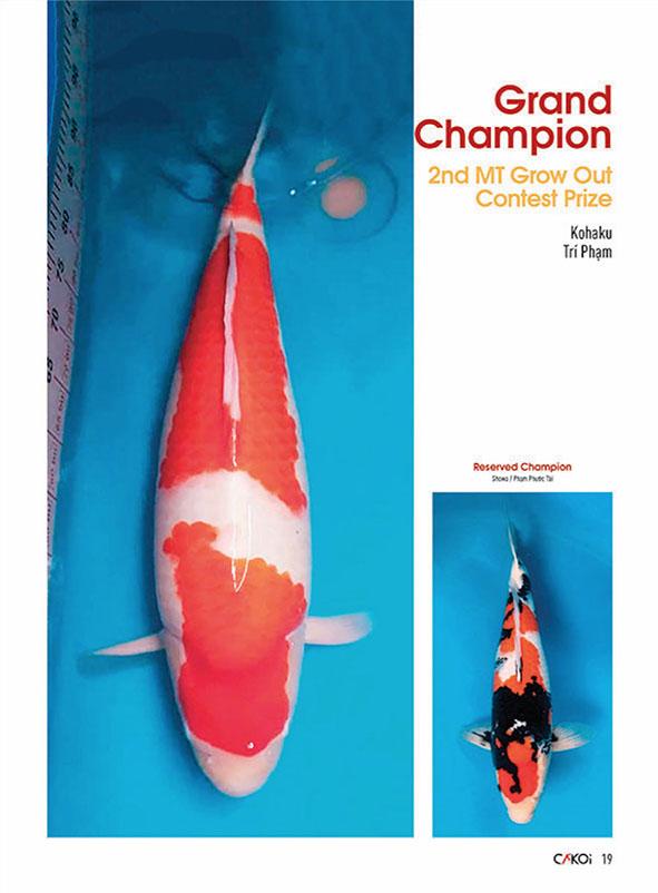 Cá Koi (Tập 3)
