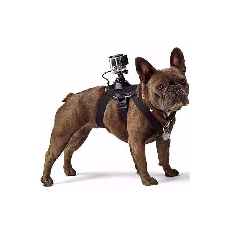 Đai đeo Gopro lên lưng thú cưng