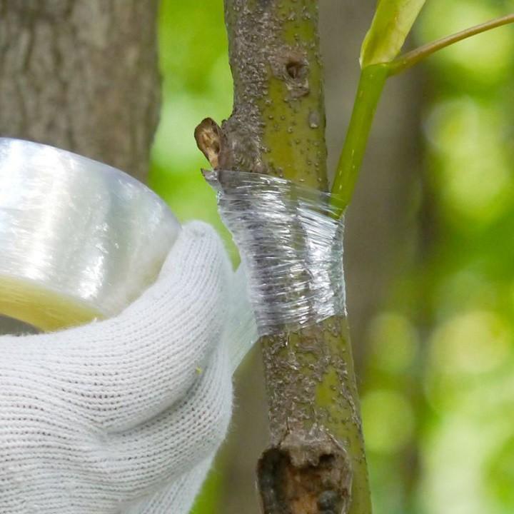 Băng ghép cây tự hủy khổ 3cm