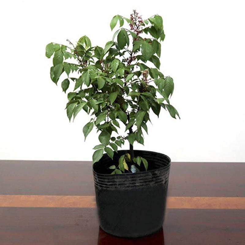 50 Chậu C13 NHỎ 34x29cm nhựa PE dẻo trồng cây bền từ 5 đến 10 năm-77110