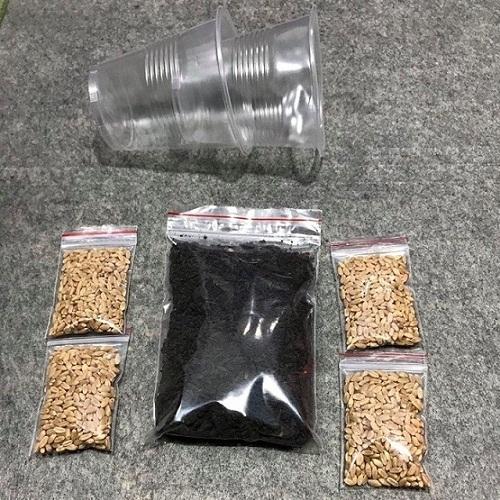 Bộ trồng cỏ mèo - Cỏ mèo (gồm đất, 4 gói hạt giống và 2 cốc)