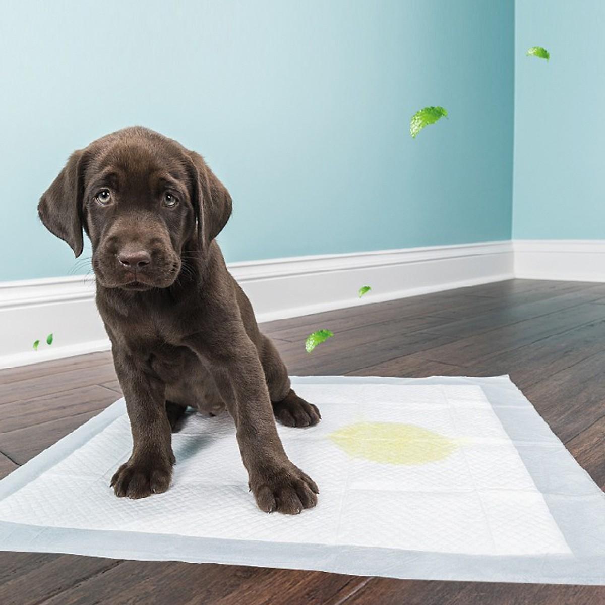 Combo 10 miếng lót chuồng, vệ sinh cho chó
