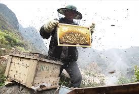 Mật ong rừng Tây Bắc Phúc Khang 140G - Thu hoạch tự nhiên - Nguyên chất - Không nhiễm hóa chất , Kháng sinh , Kim loại nặng , Chất bảo vệ thực vật - Tặng hộp trà sâm hàn quốc 10 gói khi mua từ 3 hũ 5