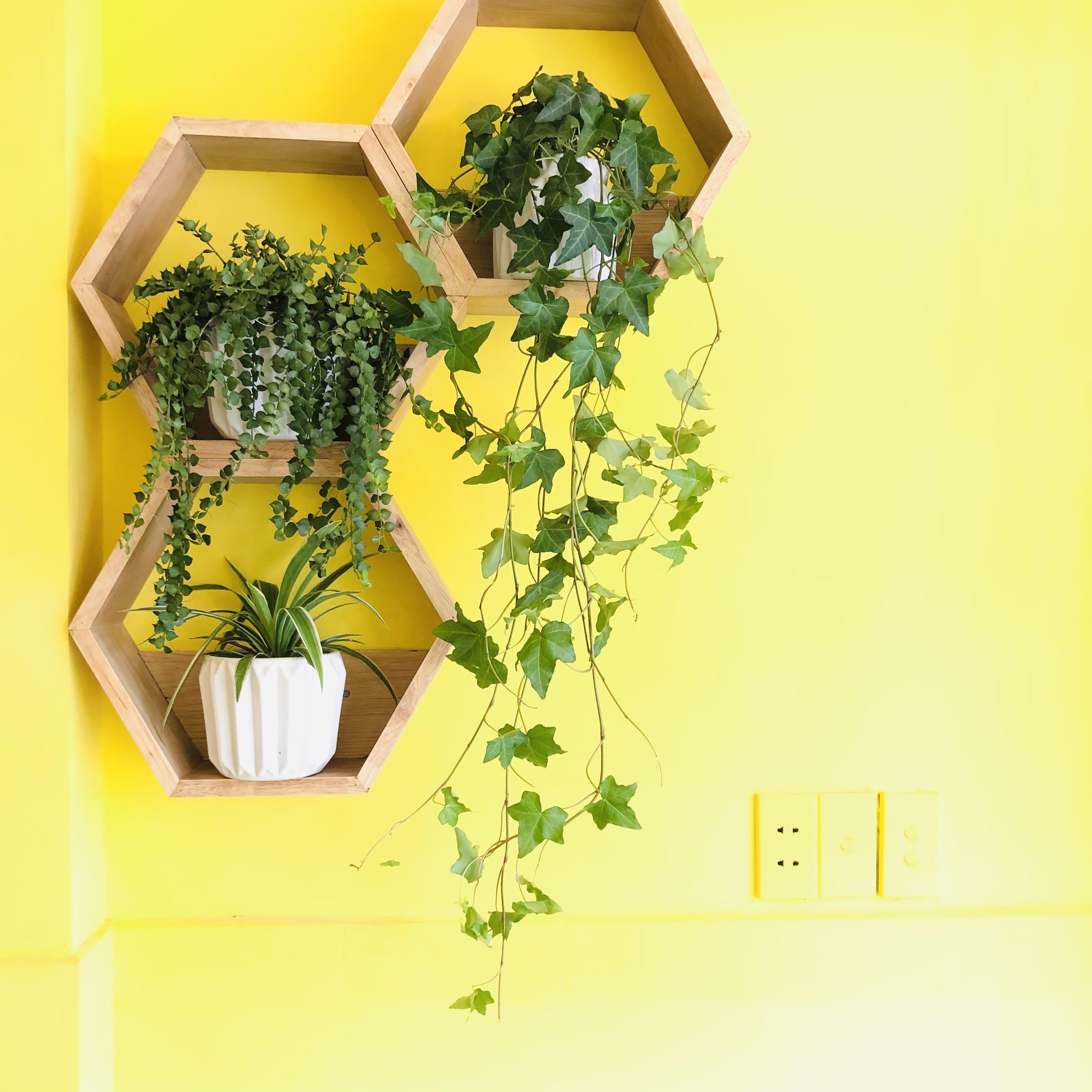 Kệ lục giác gỗ tự nhiên treo tường - 1 kệ