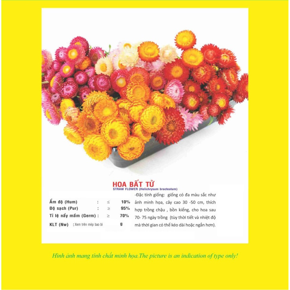 02 gói Hạt giống hoa bất tử nhiều màu Italy VTP69