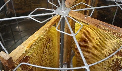 Mật ong rừng Tây Bắc Phúc Khang 140G - Thu hoạch tự nhiên - Nguyên chất - Không nhiễm hóa chất , Kháng sinh , Kim loại nặng , Chất bảo vệ thực vật - Tặng hộp trà sâm hàn quốc 10 gói khi mua từ 3 hũ 7
