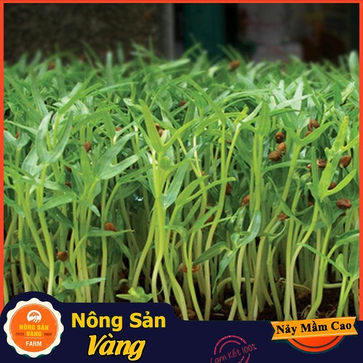 Hạt giống Rau Mầm Rau Muống ( Gói 100 Gram ) - Nông Sản Vàng