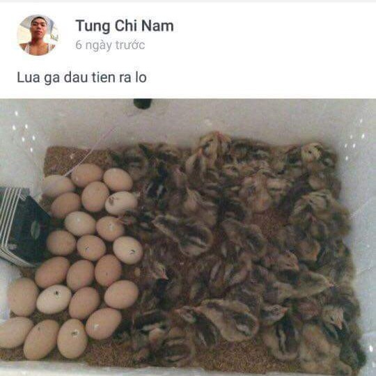Máy ấp trứng mini p100