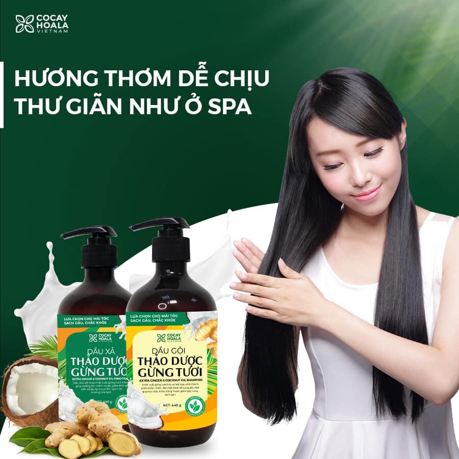 Bộ dầu gội thảo dược gừng dừa Cocayhoala hỗ trợ trị gàu, giảm nấm ngứa, dung