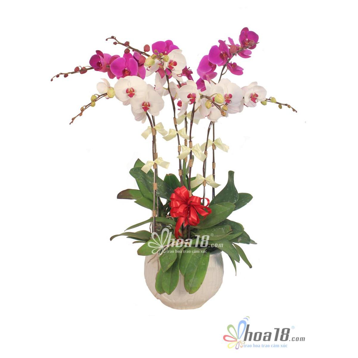 Chậu hoa tươi - Nhị Sắc 4329