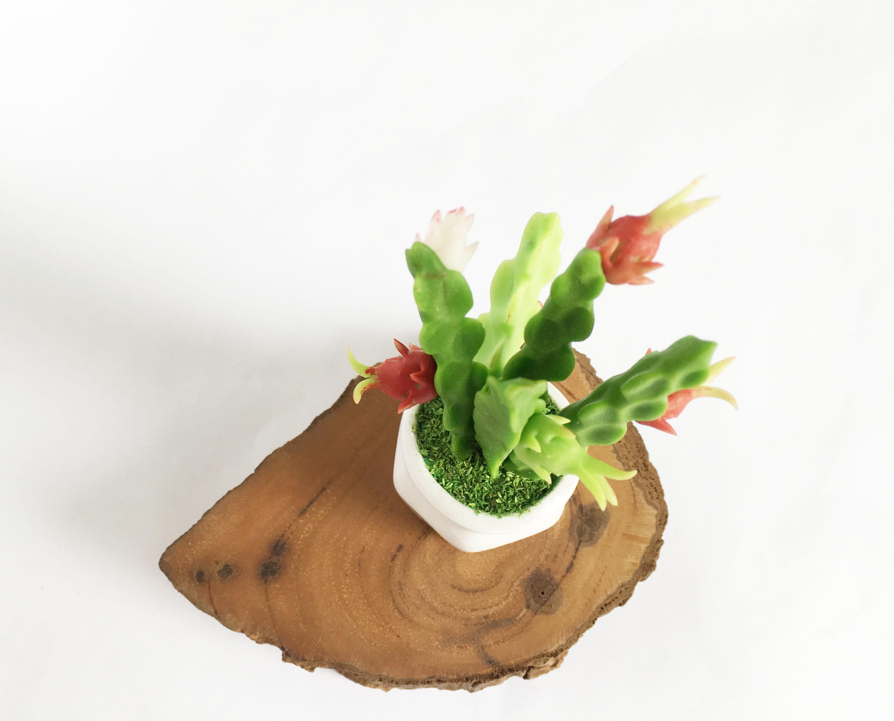 Chậu hoa đất sét mini - Cây thanh long (phát màu ngẫu nhiên) - Quà tặng trang trí handmade