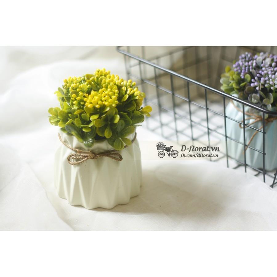 Chậu hoa hoạ tiết hoa hạt