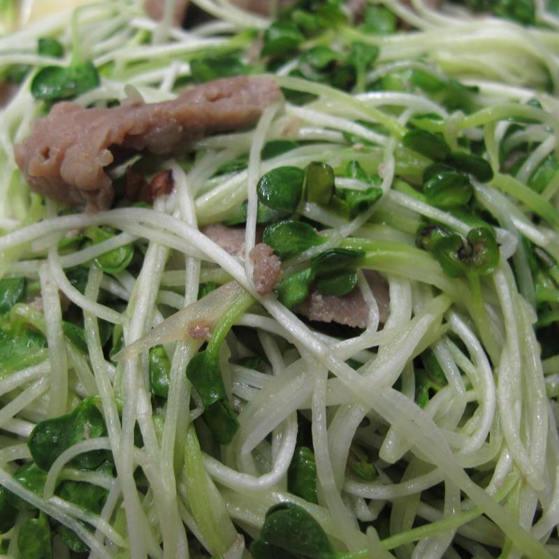 Gói 1 kg Hạt giống rau mầm Củ Cải Trắng, Đà Lạt